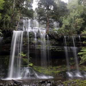 Tasmania-forest-850x455